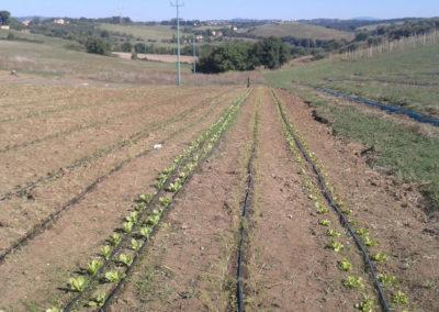 12-azienda-agricola-il-casale-di-roma
