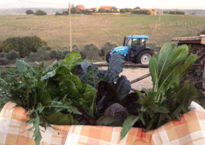 6-azienda-agricola-il-casale-di-roma