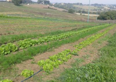 8-azienda-agricola-il-casale-di-roma