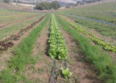9-azienda-agricola-il-casale-di-roma