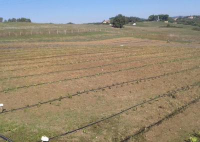 11-azienda-agricola-il-casale-di-roma
