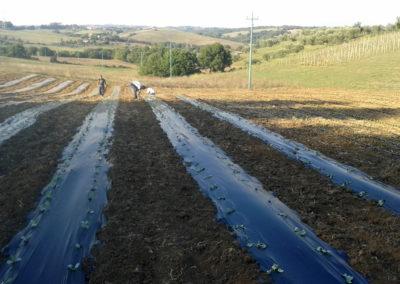 13-azienda-agricola-il-casale-di-roma