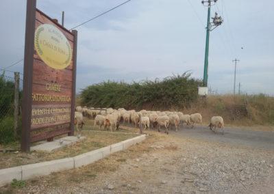 2-azienda-agricola-il-casale-di-roma-1