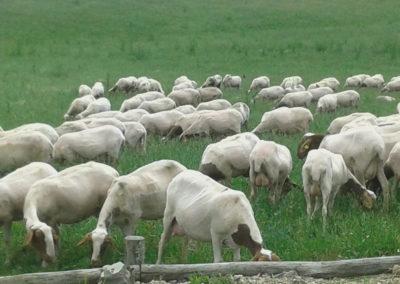 4-azienda-agricola-il-casale-di-roma