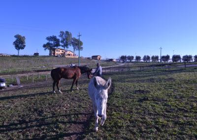 4-fattoria-didattica-il-casale-di-roma