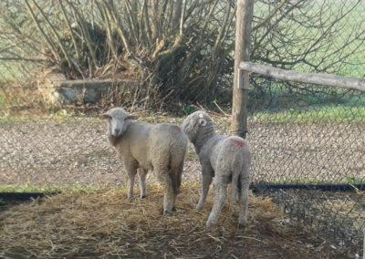 5-azienda-agricola-il-casale-di-roma